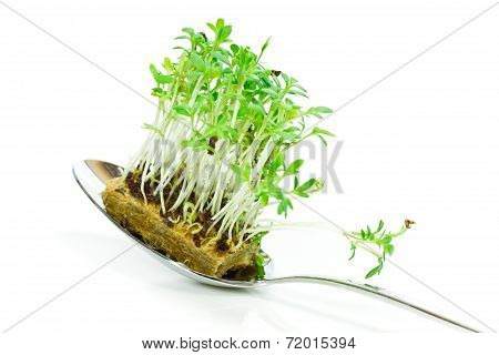 cress on spoon
