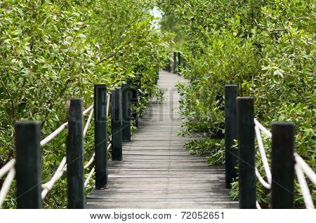 Wooden Bridge In Nature Close To Mangrove Forest