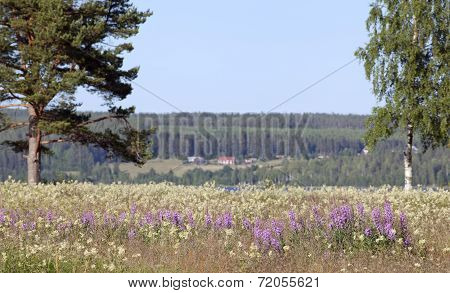 Nordic landscape, countryside in the Inland during summer.