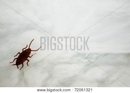Toy Roach Crawling On A Spider Web With Copy Space