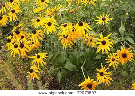 A field with large red and yellow and orange flowers at the dacha in Russia