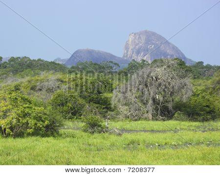 Yala Landscape