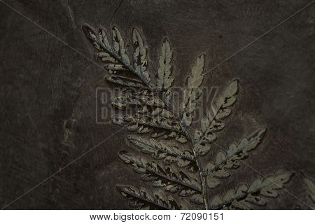 Fossilized Fern