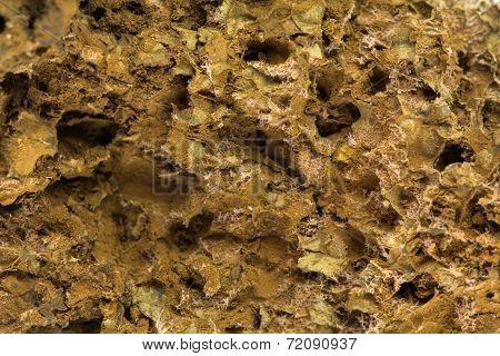 Mushroom Spore Background
