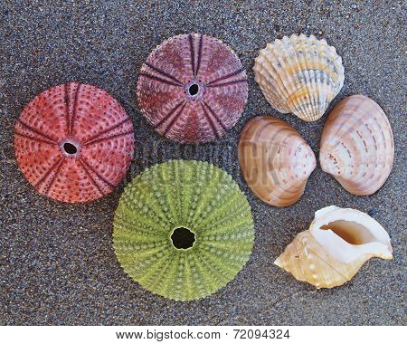 sea urchins and shells on wet beach