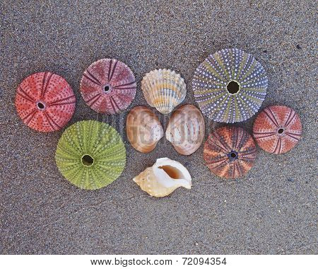 a collection of sea urchins and shells