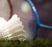 picture of shuttlecock  - Shuttlecock on badminton racket - JPG