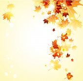 stock photo of canada maple leaf  - Bright background with maple autumn leaves - JPG