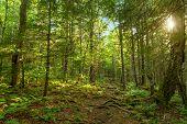 stock photo of acadian  - Moose Horn Trail Path  - JPG
