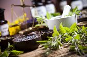 stock photo of century plant  - Natural medicine - JPG