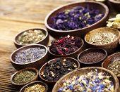 picture of century plant  - Alternative medicine - JPG