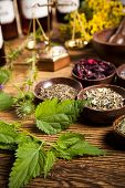 picture of century plant  - Herbal medicine  - JPG