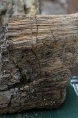 image of petrified  - petrified wood found in a forest in South Dakota - JPG