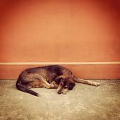 picture of stray dog  - Exhausted homeless stray dog fighting to live - JPG