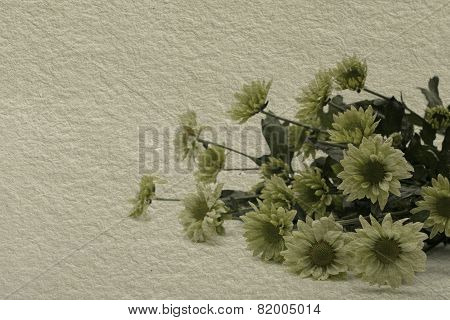 Textured Old Paper Background With Aster