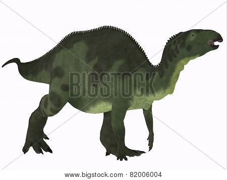 Camptosaurus Over White