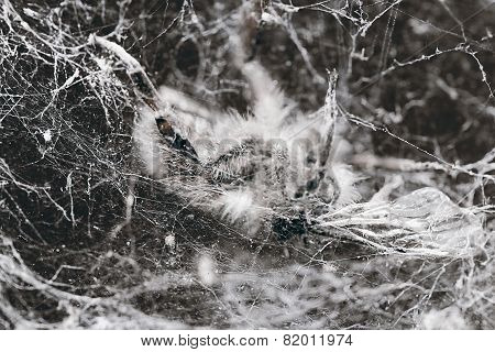 A life webbed away