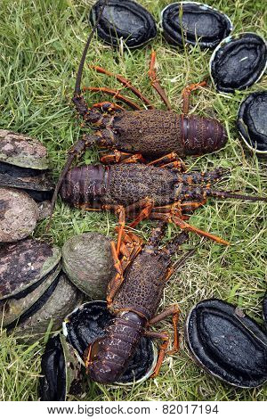 Spiny crayfish (lobster) and paua (abalone)