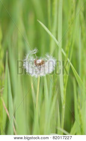Weeds Soft Light