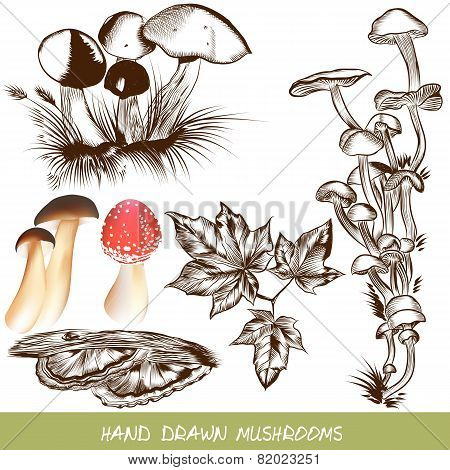 Collection Of Vector Mushrooms For Design