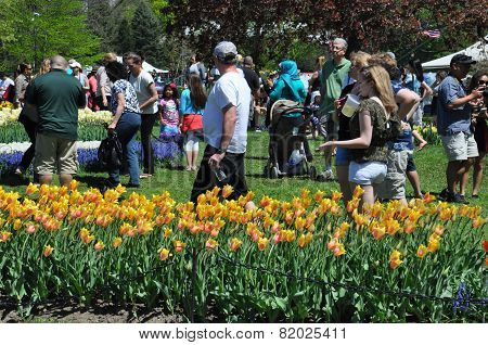 The 2014 Tulip Festival at Washington Park in Albany, New York State