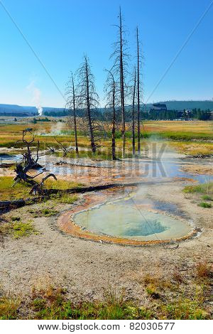 Steaming Geyser And Dead Trees In Upper Geyser Basin Of Yellowstone National Park, Wyoming