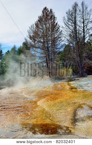 Trees In Steam In Mammoth Hot Springs Area Of Yellowstone National Park, Wyoming