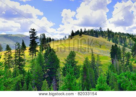 Meadow In Calcite Springs Area Near Tower Rosevelt In Yellowstone National Park In Summer