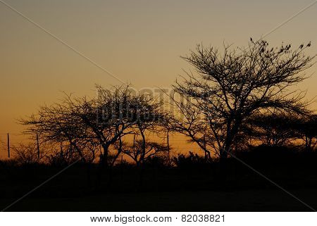 Namibian sunrise with tree silhouettes