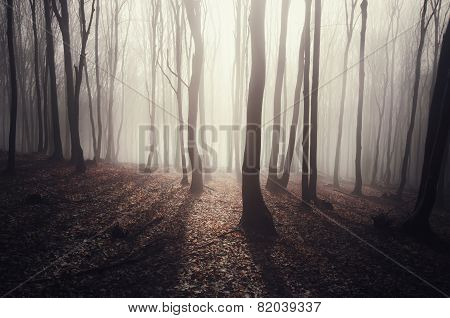 Rays in forest with fog