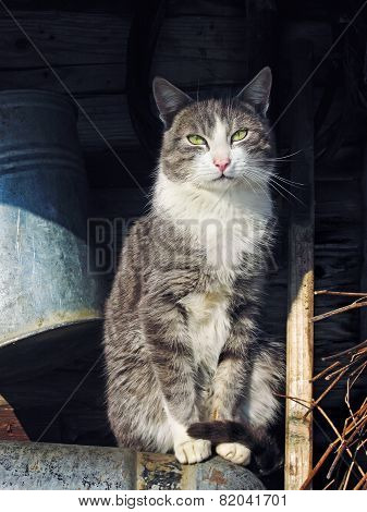 Beautiful Grey Cat Is Looking At Camera Outdoor
