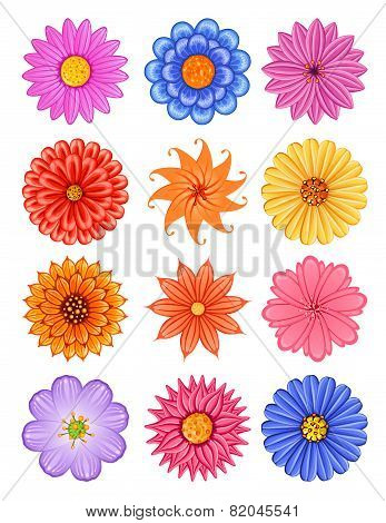 various colorful flower