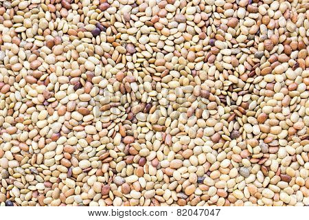 Macrotyloma uniflorum or horse gram background