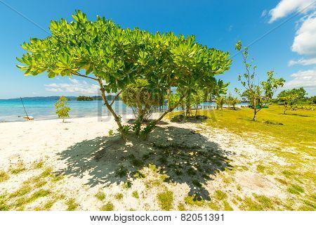 Tree Branches On Blue Lagoon