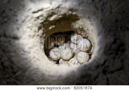Green sea turtle eggs in sand hole on a beach