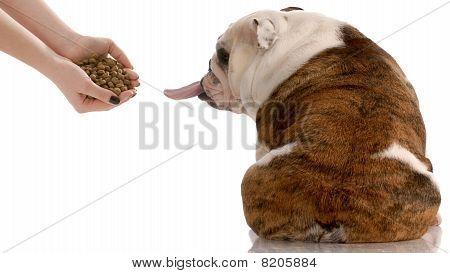 Picky Dog