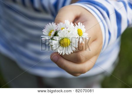 Daisy Bouqet In Child Hand