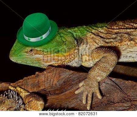 Green Leprechaun Lizard.