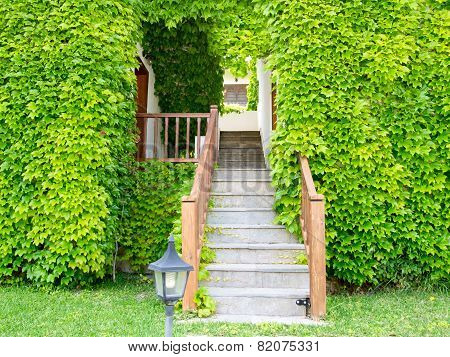 Stone Stairs and Ivy