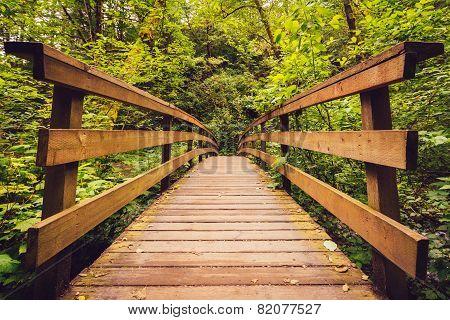 Walking Bridge in the Forest