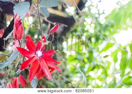 Beautiful Red Wild Flower Bloom