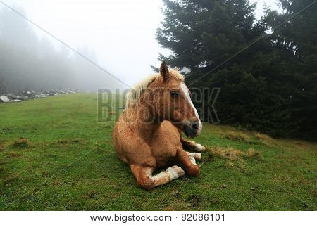 Horse Sitting On Grass In Mist