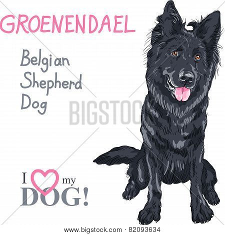 Dog Belgian Shepherd Dog, Groenendael  Breed