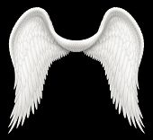 foto of cherubim  - Digital illustration of angel wings - JPG