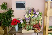 image of flower shop  - Closeup display beautiful Flower Shop decorations design - JPG