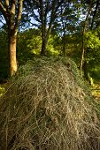 stock photo of haystack  - Haystack and trees in a garden in Summer - JPG