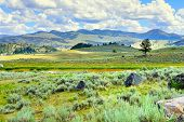 stock photo of lamar  - Lamar Valley in Yellowstone National Park Wyoming in summer - JPG