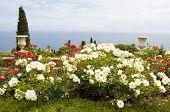 foto of crimea  - Summer landscape  - JPG