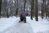 picture of buggy  - The Woman walking with buggy in winter park - JPG