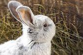 pic of rabbit hutch  - Close up photo of a beautiful rabbit - JPG